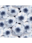 Set - Place Mats + Cloth Napkin - Winter Flowers